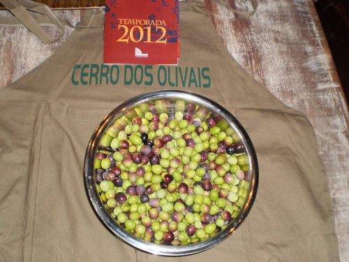 Aberta a colheita da azeitona para elaboração de azeites e azeitonas de mesa